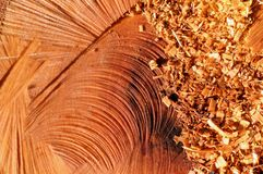 Sawdust on wood. Sawdust flakes piled on logs of wood stock photo