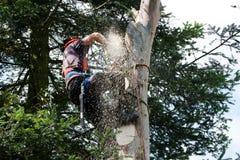 Sawdustflyg runt om chainsawen Arkivfoto
