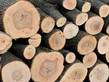 Sawed ends of logs stacked in a timber yard Royalty Free Stock Photos
