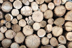 The sawed fire wood. The fire wood sawed by chocks combined by a stack Royalty Free Stock Images