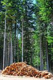 Sawed Firewood Royalty Free Stock Photo