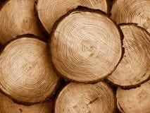 Sawed pine wood Royalty Free Stock Image