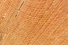 Sawed tree trunk cut close up Stock Photo