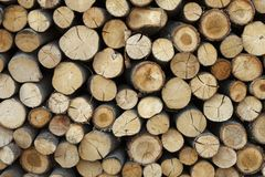 Sawed tree trunks and branches in different sizes, piled up in blue container Wood storage Timber industry Royalty Free Stock Photography