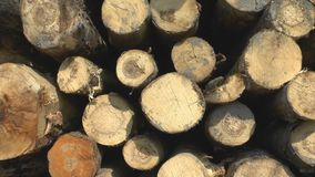 Sawed tree trunks stock video footage