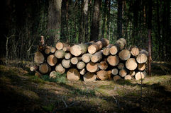 Sawed wood in the forest. Royalty Free Stock Photography