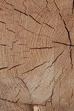 Sawed wood light beige brown surface texture natural many lines rustic background base design dried wood stock photos