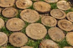 Sawed wooden stumps texture Stock Photos