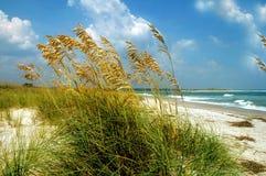 Sawgrass на пляже Стоковое Изображение RF