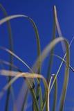 Sawgrass Lizenzfreies Stockfoto