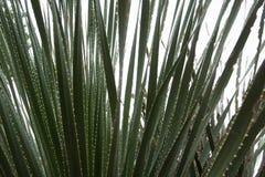 Sawgrass obraz stock
