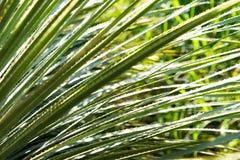 Sawgrass Imagen de archivo libre de regalías