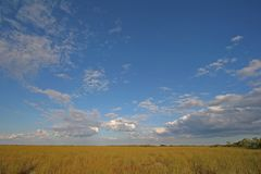 Sawgrass expanse in Everglades National Park, Florida. Sawgrass expanse in Everglades National Park, Florida, from the Pa-Hay-Okee boardwalk under a beautiful stock image