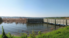 Sawgrass lake panorama Stock Photo