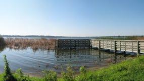 Sawgrass lake panorama. Little dock on the lake in Sawgrass Florida stock photo
