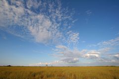 Sawgrass vidd i Everglades nationalpark, Florida royaltyfri foto
