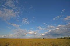 Sawgrass vidd i Everglades nationalpark, Florida fotografering för bildbyråer