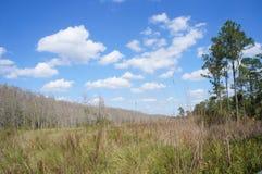 Sawgrassprairie bij het Heiligdom van het Kurketrekkermoeras Royalty-vrije Stock Afbeelding