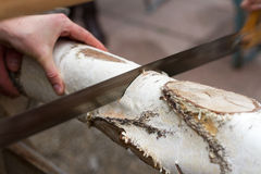 Sawing Birch (2) Stock Photo