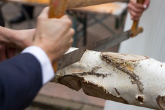 Sawing Birch (1) Stock Image