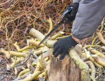 Sawing branch stock images