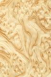Sawing de la raíz de la aceituna (textura de madera) Foto de archivo libre de regalías
