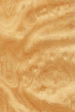 sawing de la raíz de los Ceniza-árboles (textura de madera) Fotografía de archivo libre de regalías