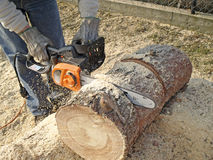 Sawing firewood Stock Image