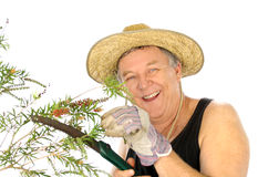 Sawing Gardener Stock Images