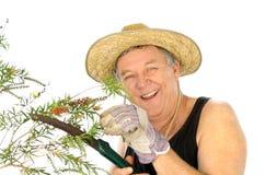 Sawing Gardener Stock Images