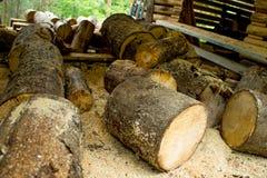 Sawing logs Royalty Free Stock Photos