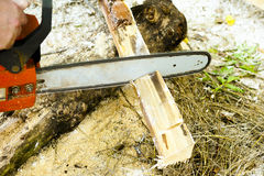 Sawing wood with a chainsaw. Carpenter working Royalty Free Stock Image