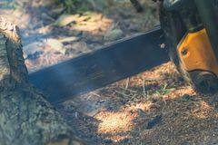Sawing wood with a chainsaw. The summer production of wood royalty free stock photos