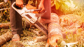 Sawing the wood. Close-up Sawing the wood and sunrise Royalty Free Stock Photo