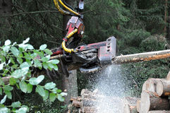 Sawing in the woods Stock Photography