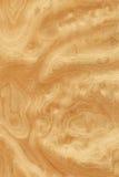 Sawing Wurzel der Asche-Bäume (hölzerne Beschaffenheit) Lizenzfreie Stockfotografie