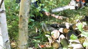 Sawingträ med en chainsaw lager videofilmer