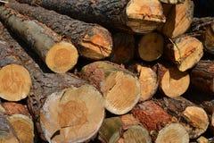 Sawlogs to produce general-purpose lumber Stock Images
