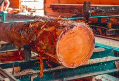 sawmill  foto de stock royalty free