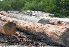 sawmill Imagens de Stock Royalty Free