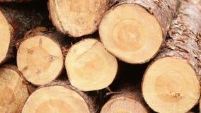 Sawmill bark boards. Storage wood stock video footage
