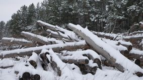 Sawmill logs of pine trees in snow winter forest Christmas nature tree landscape stock footage