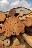 Sawmill. logs stacked in a pile. Royalty Free Stock Photography