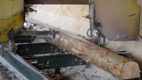 Sawmill. Process of machining logs in sawmill machine saws the tree trunk. Sawmill. Process of machining logs in equipment sawmill machine saw saws the tree stock video