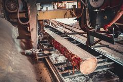 Sawmill. Process of machining logs in sawmill machine saws the tree trunk. Sawmill. Process of machining logs in equipment sawmill machine saw saws the tree stock photography