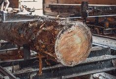 sawmill Processen av att bearbeta med maskin loggar in sågverkmaskinsågar ten royaltyfria bilder