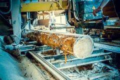 sawmill Processen av att bearbeta med maskin loggar in sågverkmaskinsågar ten royaltyfri foto