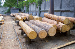 Sawmill. Warehouse timber stack of Logs of pine for sawing beams boards lumber Royalty Free Stock Image