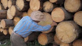Sawmill worker measures the thickness of the logs lying stacks writes the result stock video