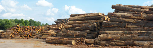 Sawmill yard  logs woodpiles stacks. Sawmill yard woodpile logs, forest industry and construction raw material Stock Photos